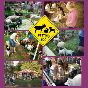 petting Zoos and ponies